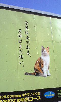 Cat_kanban